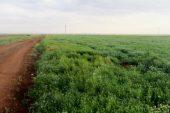 مذكرة قانونية ضد استيلاء النظام على أراضي المزارعين السوريين في إدلب